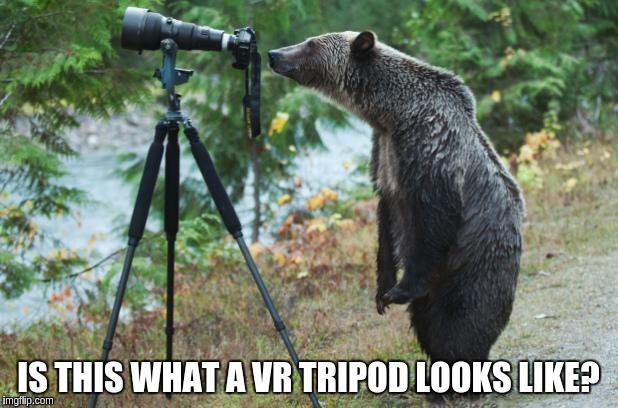 virtual sex cams: bear watching through a cam on a tripod